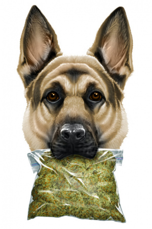 UP NARCO DOG by Munk One